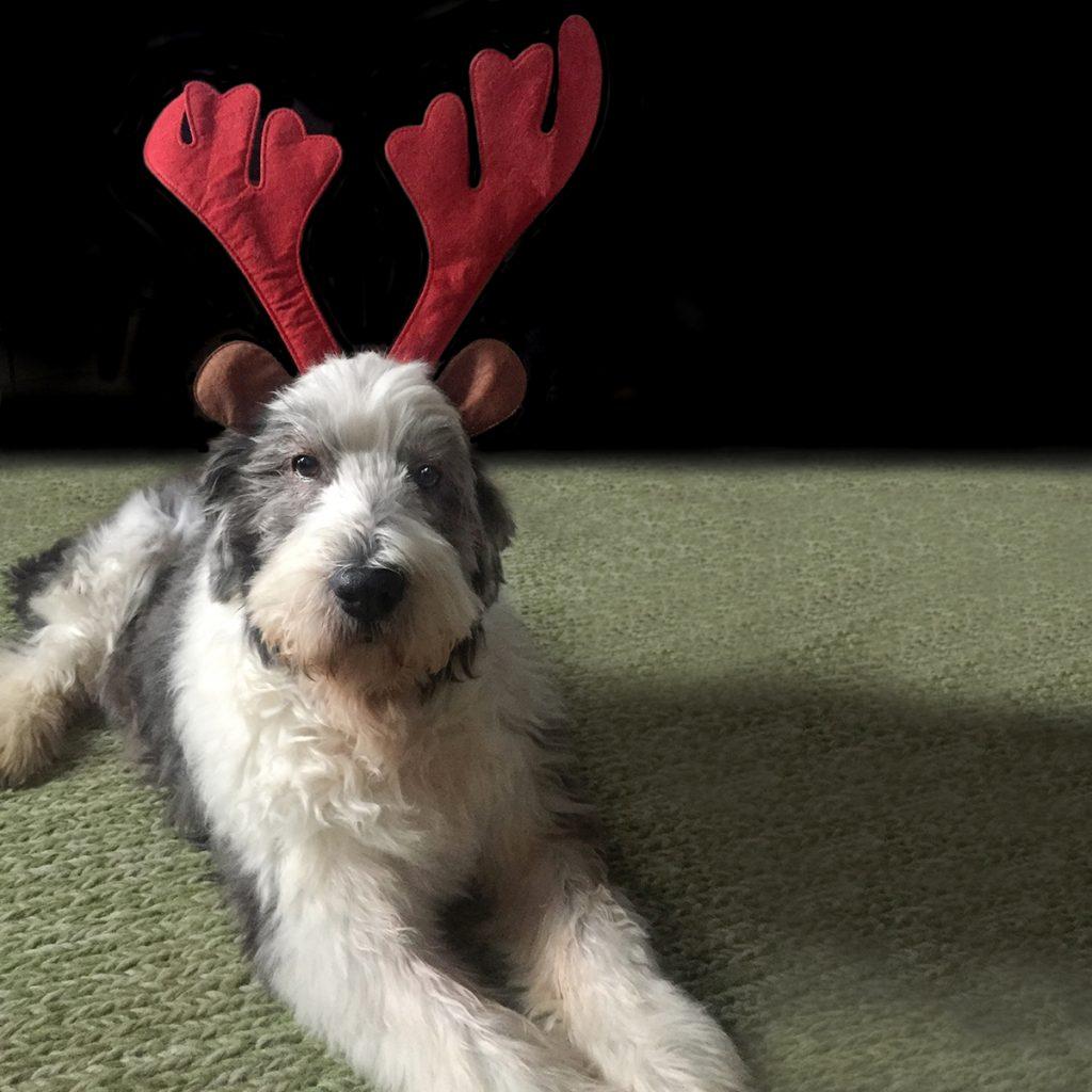 Foto af Molly som Rudolf