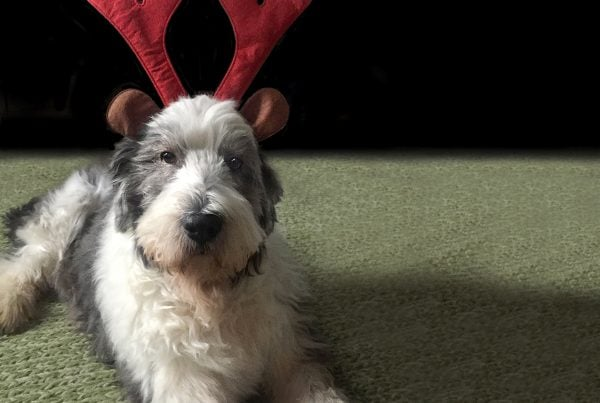 Photo of Molly as Rudolf